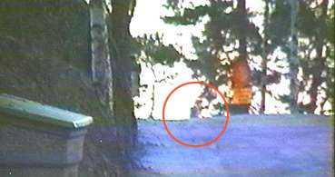 HÄR SPRINGER VARGEN Ett stort antal vittnen såg den påstådda vargen, såväl i city som i Solna. Vargen jagades i fyra timmar innan jakten avbröts i närheten av Järvafältet. Den här bilden togs av frilansfotografen Janne Åkesson i Sundbyberg tidigt i morse. Vargen springer förbi på backkrönet.
