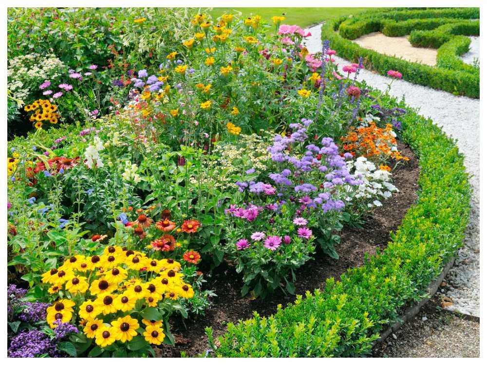 Snegla på grannen när du väljer växter till din trädgård så ser du vad som trivs.
