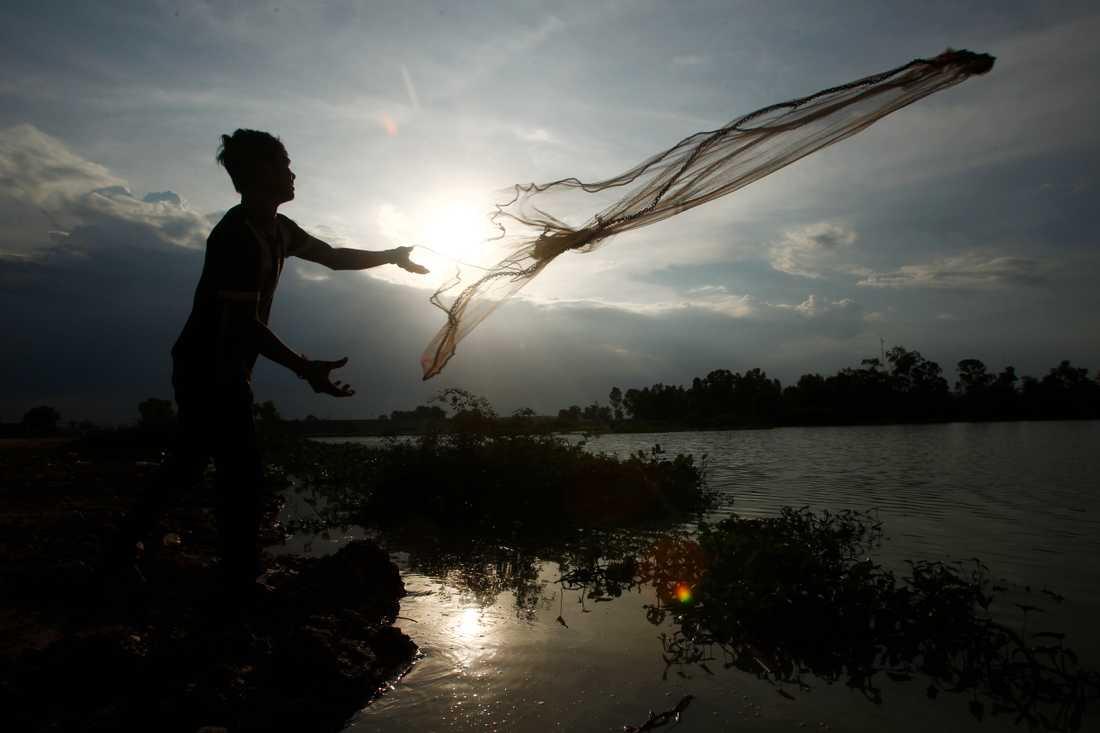 En byggnadsarbetare i utkanten av Kambodjas huvudstad Phnom Penh kastar ut ett fiskenät i ett område som nyligen svämmats över av regnvatten.