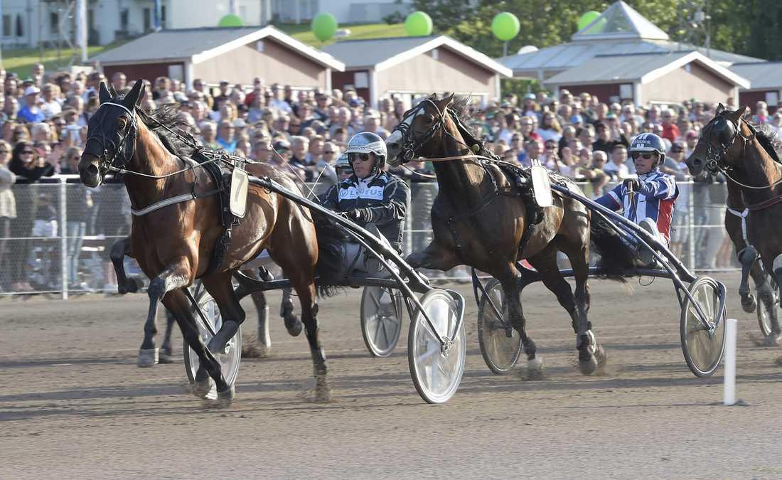 Diamanten har stått för ett riktigt succéår hittills. Peter Forsbergs stjärnhäst, tränad av Robert Bergh har bland annat vunnit Sprintermästaren.