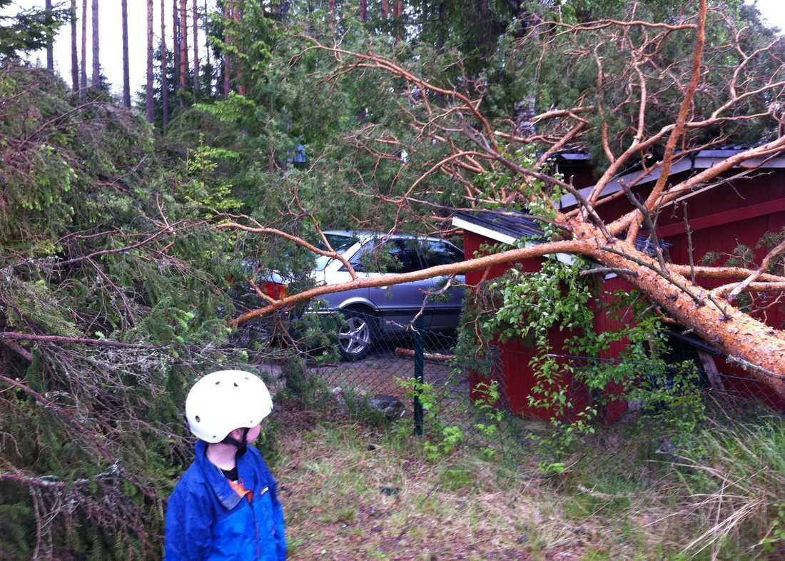 Nedfallna träd i Boviken, norr om Skellefteå, sedan en tromb passerat. Åska och tromber drabbade Västerbotten med kallfronten som passerade på lördagen. Mer än 6 000 abonnenter blev strömlösa när träd föll över elledningar och vägar.