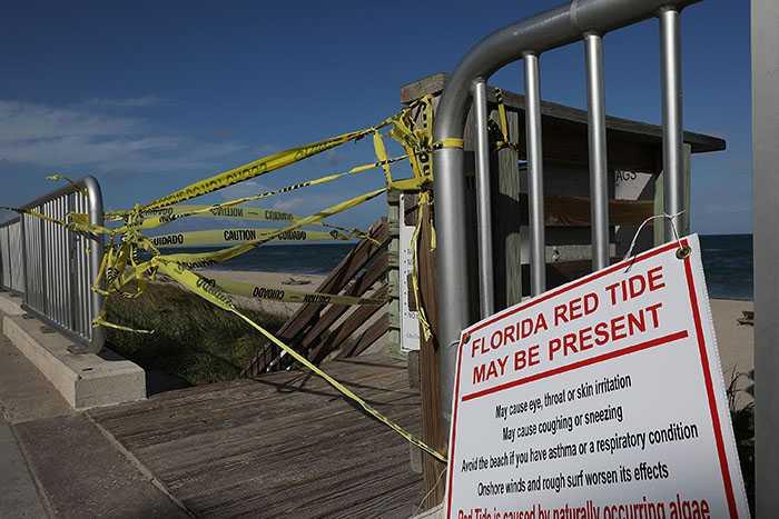 Algblomning i Florida har tvingat flera stränder att stänga.