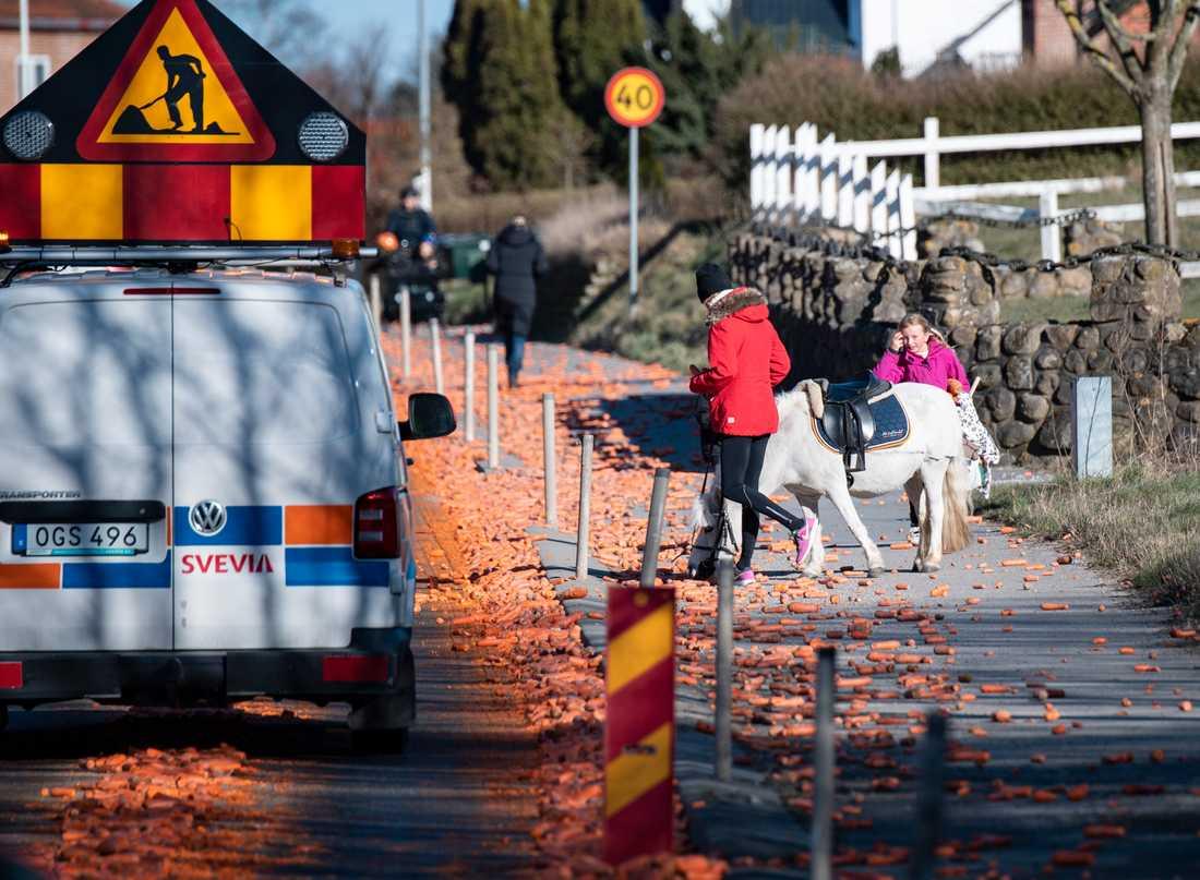 Hästen Lego passade på att ta sig en morot på väg hem till hagen. Trafikverket fick på tisdagseftermiddagen gå ut och varna trafikanter på väg 104 genom Flyinge sedan vägen fyllts av morötter.