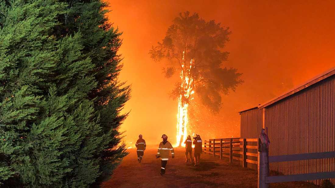 Miljoner djur beräknas ha dött till följd av bränderna som härjar i Australien.