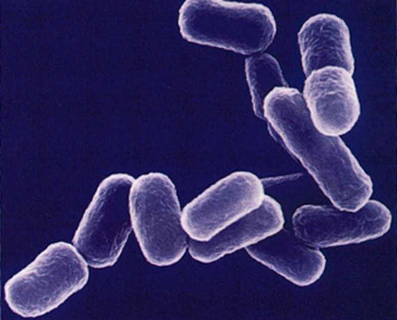 ESBL-bakterier.