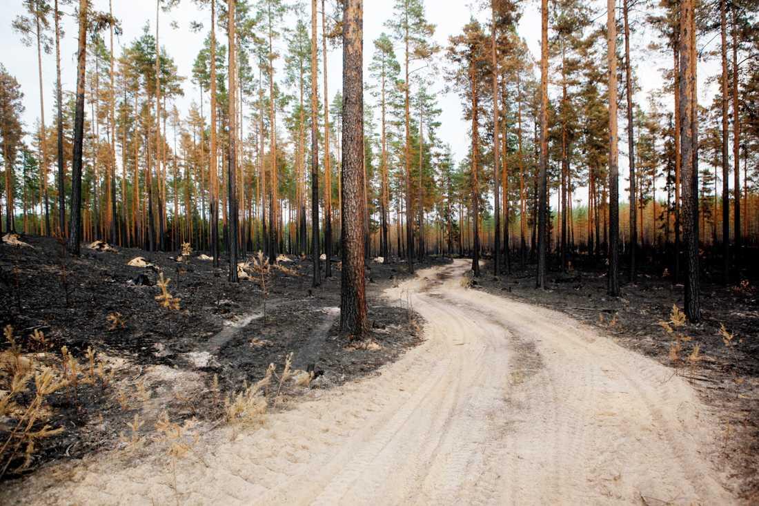 Det råder extremt hög brandrisk i södra och mellersta Sverige. Arkivbild.