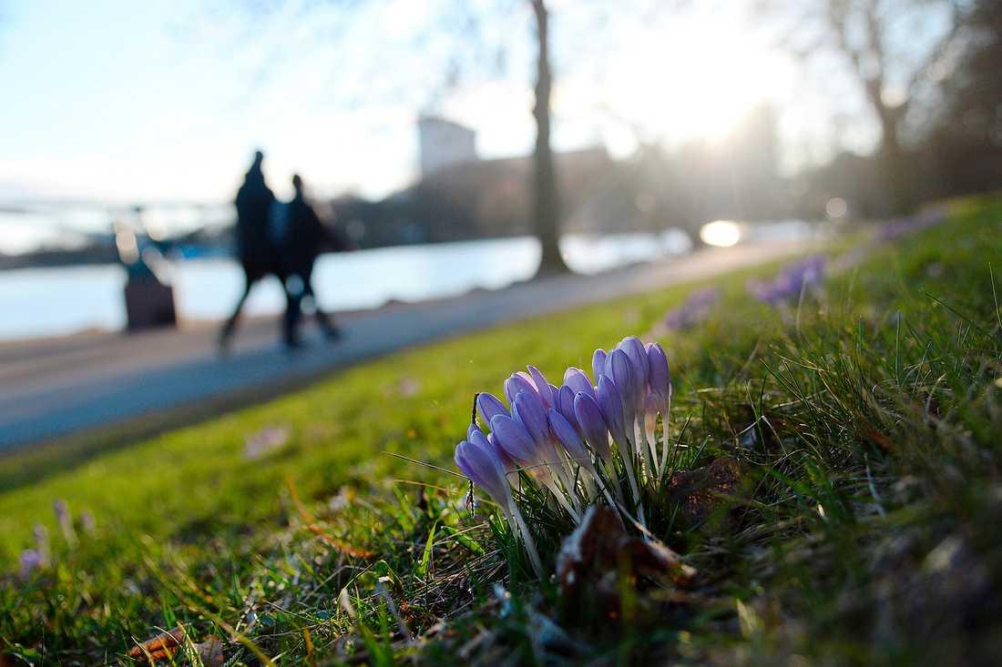 Det våras för Sverige Först några dagar regn och snö – men sedan återvänder vårvärmen.