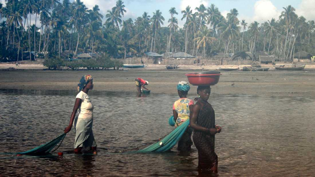 På vissa håll i Afrika, som här i Moçambique, används de myggnät som ska skydda mot malaria som fisknät i stället. Eftersom näten är så finmaskiga fångas mängder med småfisk, varpå de redan ansträngda ekosystemen hotas.