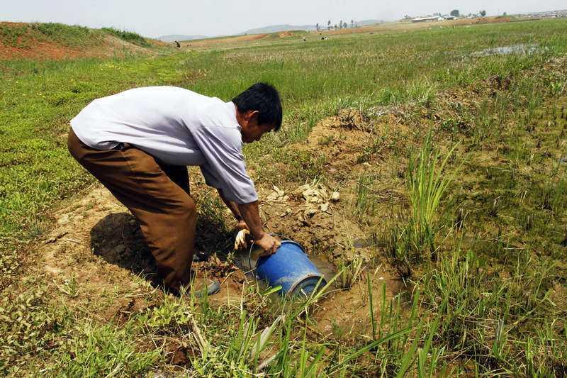 NORD- OCH SYDKOREA: Den värsta torkan på minst 105 år Värsta torkan sedan vädermätningarna började för 105 år sedan. Två tredjedelar av Nordkoreas  befolkning riskerar matbrist på grund av torkan, enligt en FN-rapport som släpptes förra veckan. Tusentals hektar i Phyongan- och Hwanghae-provinserna i Nordkorea uppges ha förstörts i torkan.