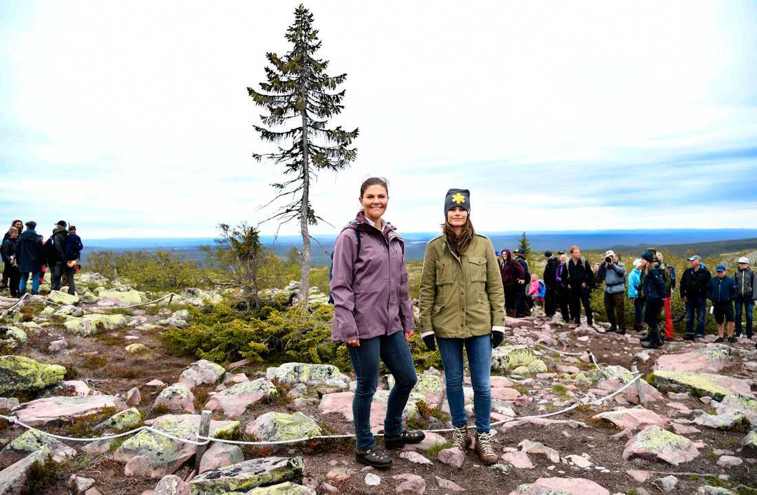 Prinsessorna framför Old tjikko, världens äldsta träd, på Fulufjället i Dalarna.