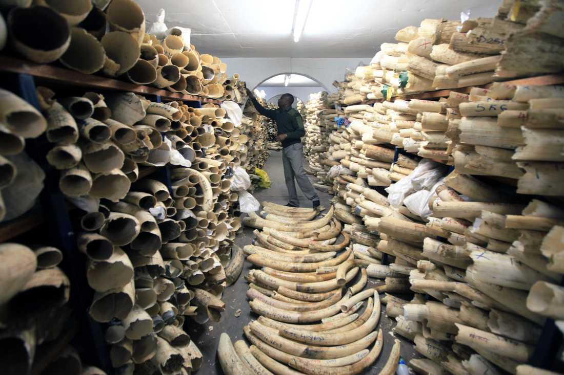 Svenska turister fortsätter att handla med illegala varor som exempelvis elfenben, visar en ny kartläggning av Kantar Sifo gjord på uppdrag av Världsnaturfonden (WWF). Arkivbild.