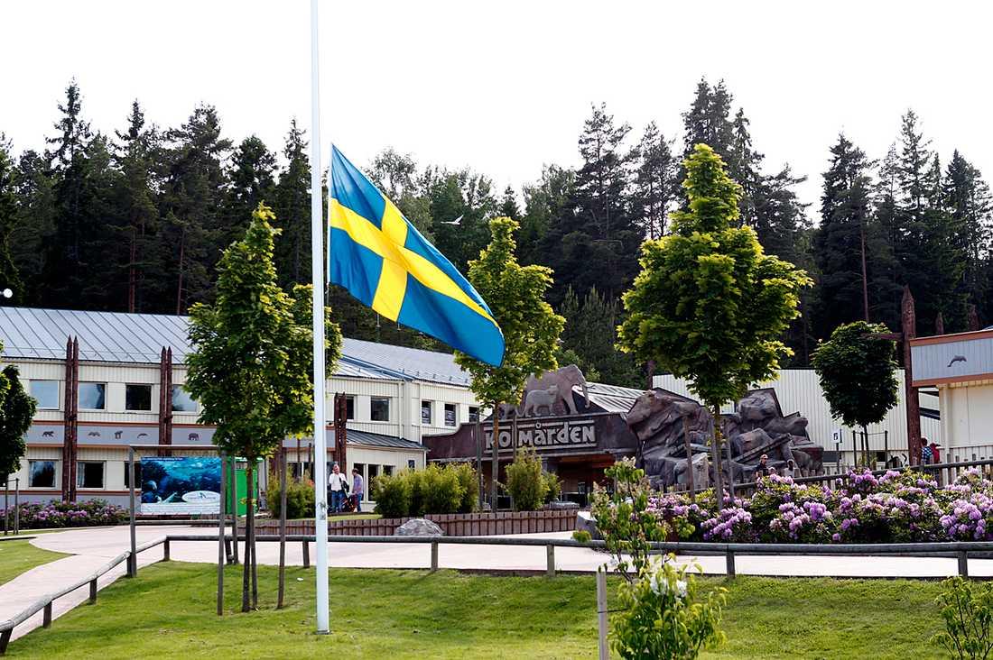 Flaggorna är hissade på halv stång.