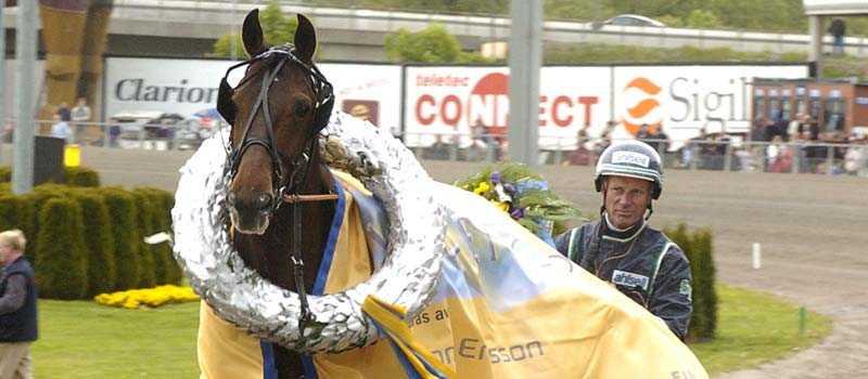 Travstjärnan Digger Crown slutar att tävla. Nu väntar avel för hingsten som tjänade 18,2 miljoner kronor hos Stig H Johansson.