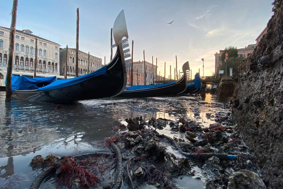 Strandade gondoler den 9 januari efter att Venedig upplevt ovanligt lågt tidvatten.