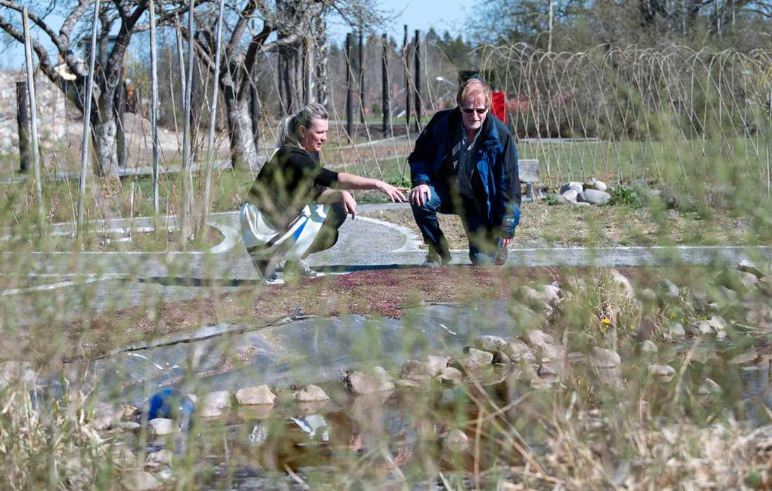Jeanette Lennartsdotter och William Hogland, professor i miljö- och ekoteknik vid Linnéuniversitetet i fytoparken i Orrefors.