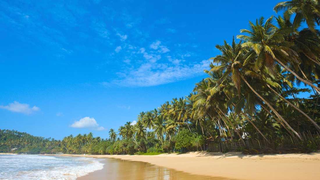 Sri Lanka bjuder på härliga stränder –men inåt land väntar många sköna upplevelser, som vilda djur och böljande teplantager.