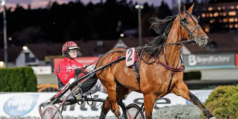 Cyber Lane är en av två Johan Untersteiner-tränade hästar i Olympiatravet. Han har även med Day or Night In som ska köras av pappa Peter.