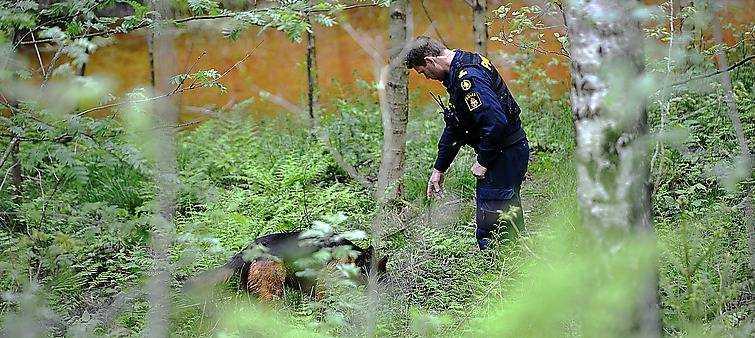 Polisen söker igenom platsen där Albin Einarsen hittades död.