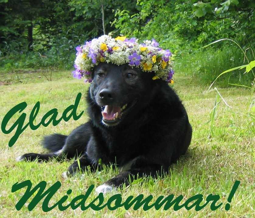 Tjelvar Hunden Tjelvars matte Titti Åberg har pyntat honom och skickar en midsommarhälsning till andra läsare.