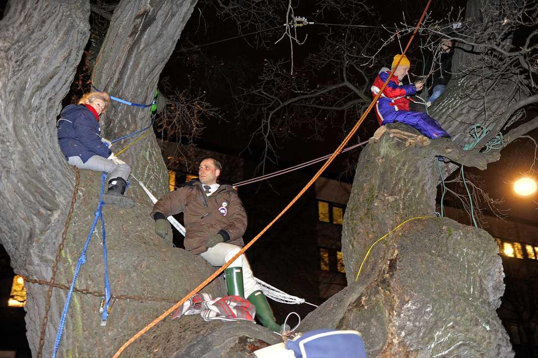 OMRINGADE I ett sista försök att skydda tv-eken hade flera  demonstranter klättrat upp på stammen.