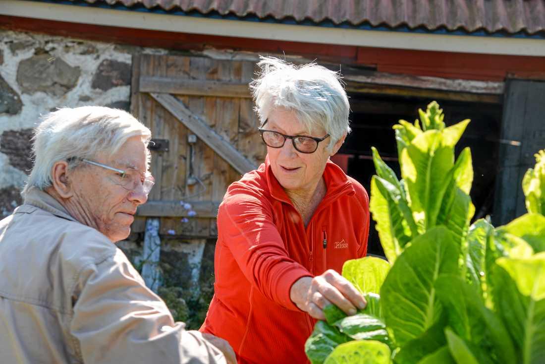 Suzanne Schlyter och Folke Günther tar emot volontärturister till sin lilla gård utanför skånska Hörby sedan några år tillbaka.