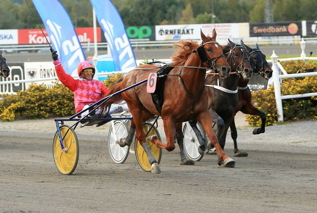 Peter Ingves vann Silverörnen med Dreammoko