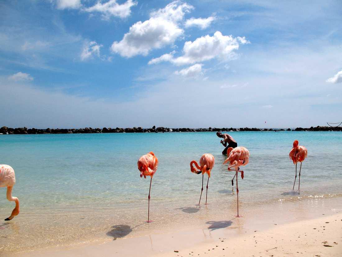 Kallt om tårna? Nä, flamingos gillar bara att stå på ett ben.