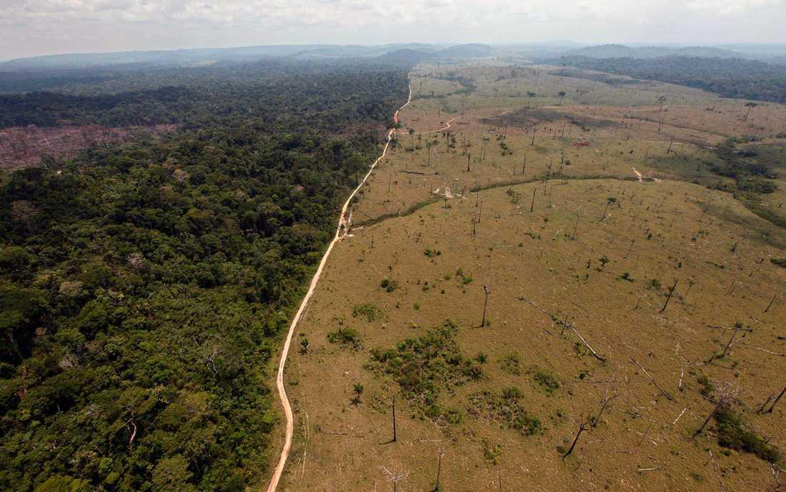 Bild från den brasilianska delstaten Para visar gränsen mellan den ursprungliga regnskogen och den avverkade