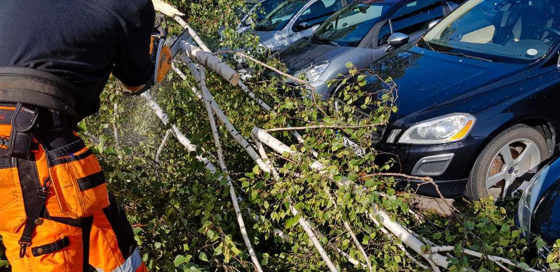 Omkullblåsta träd utanför en ICA-butik på Tjörn.