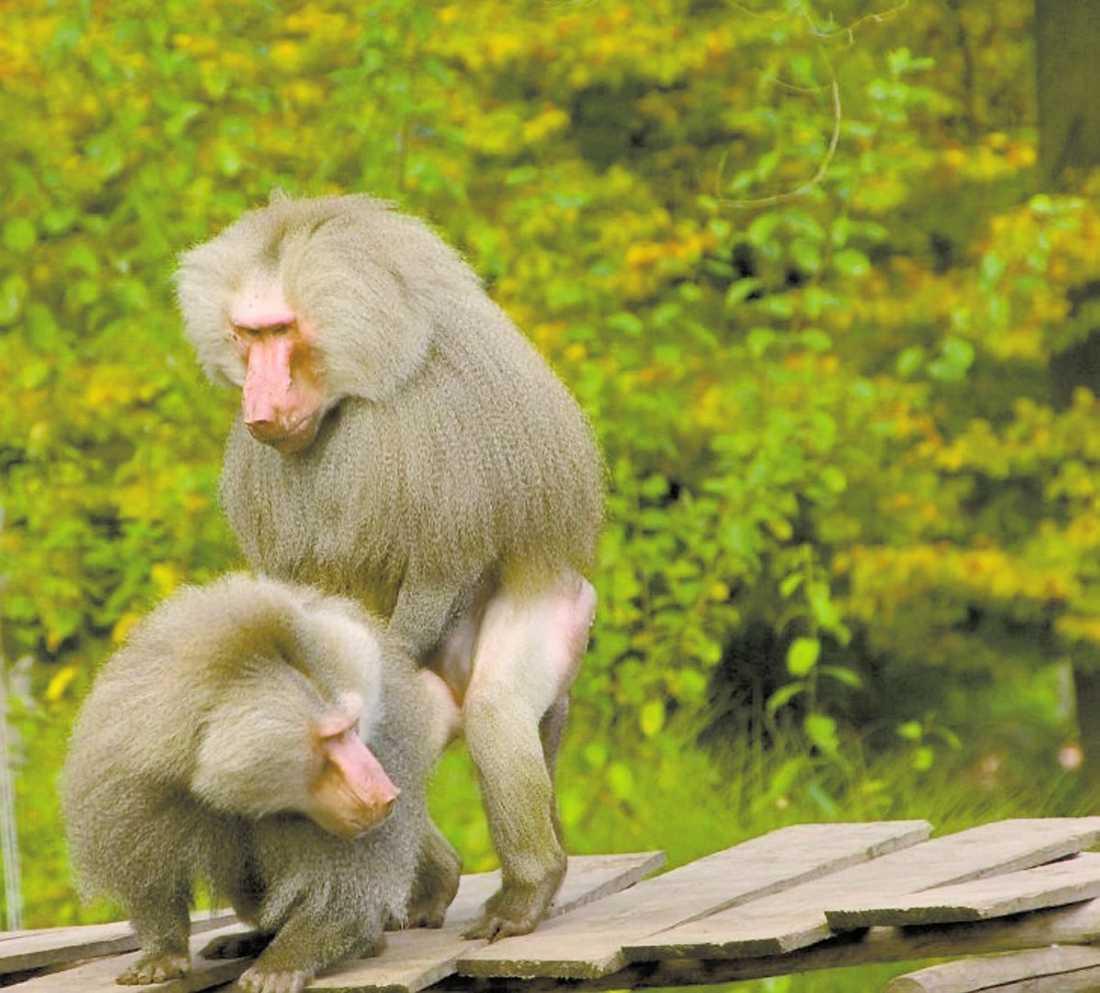 ute ur garderoben Enligt biologen Christina Ritz har forskarna tidigare haft ett heteronormativt perspektiv på djurens kärleksaffärer. Nu ska djurvärldens homosexualitet uppmärksammas med en utställning på Naturhistoriska riksmuseet.