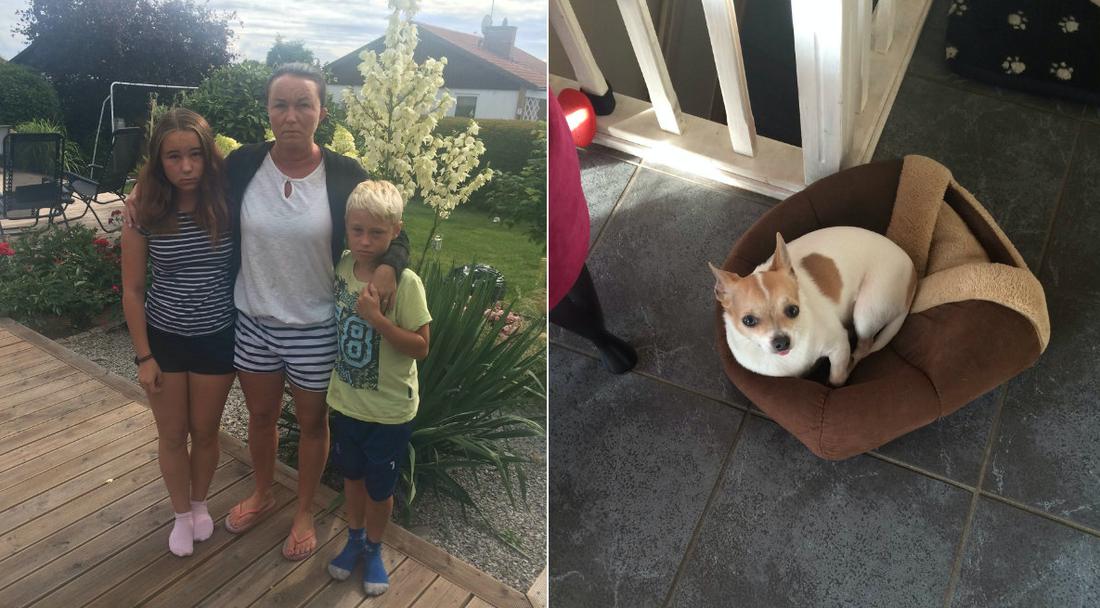 Familjens hund Toby blev ihjälbiten av en annan hund.