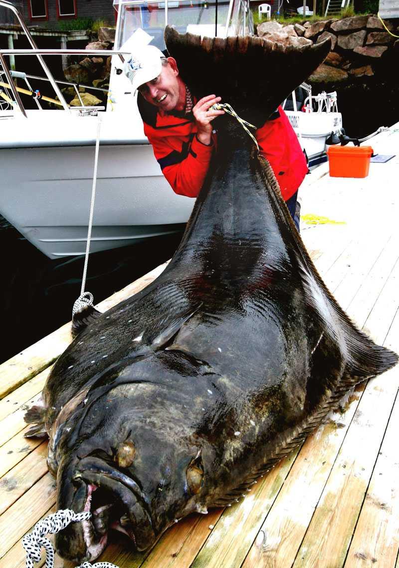 Reinhard fångade en flundra på 245 kilo.