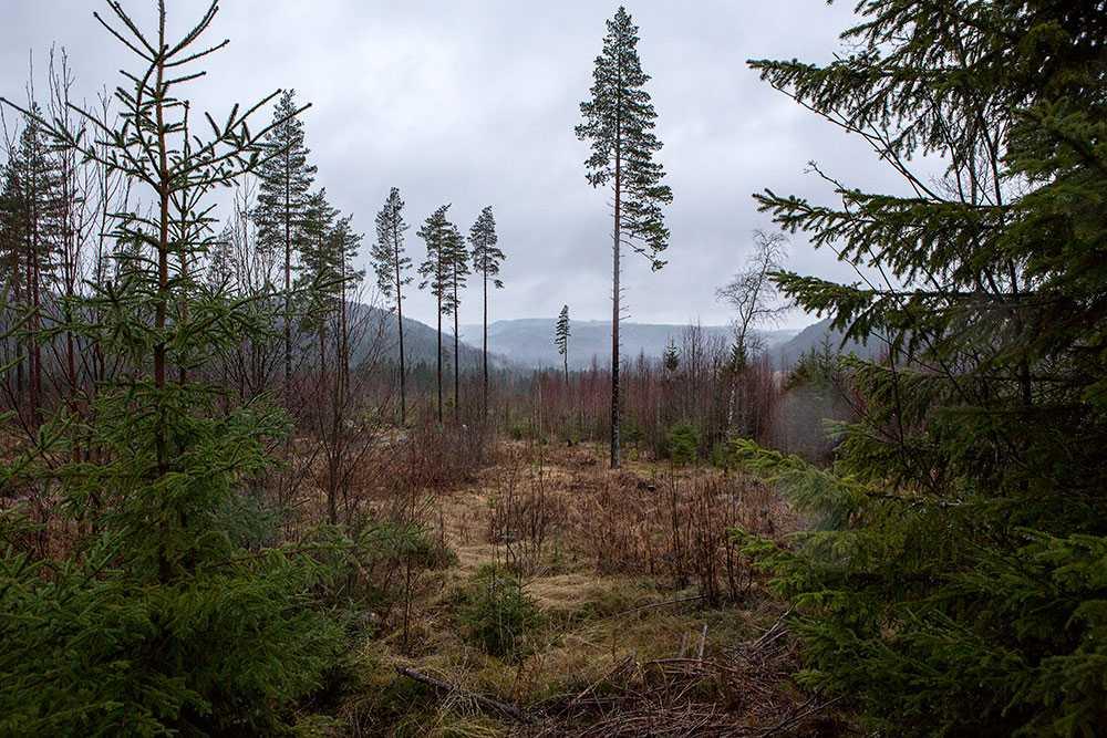 Skogen, som finns namngiven i tipset, där 11-årige Johan Asplund uppges ligga begravd.