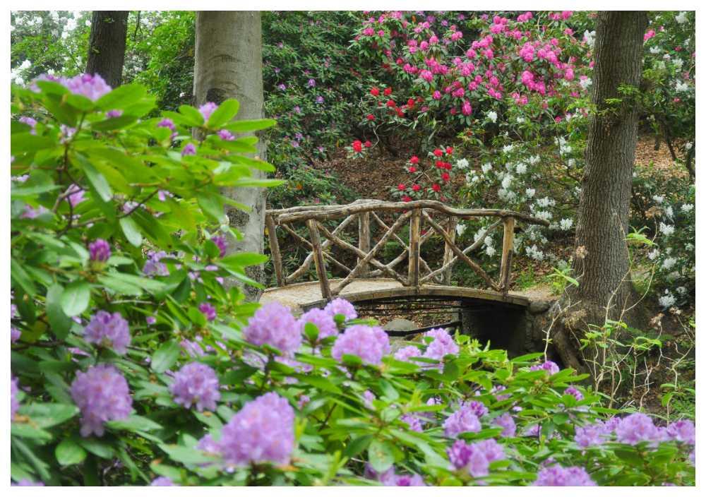 På Sofiero finns Europas största samling av rhododendron och azalea.