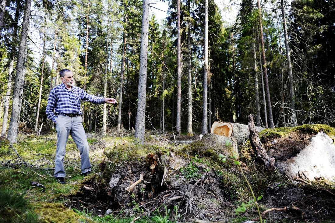 """Axel Jakobsson, som var med och räddade 78-åringen, visar var mannen satt fastklämd i fem dygn i skogen. """"Han låg på sidan längs stenen med benet in under roten"""", berättar Axel."""