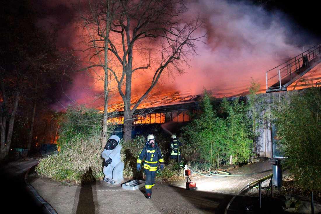 Aphuset på Krefeld zoo brann upp på nyårsdagen.
