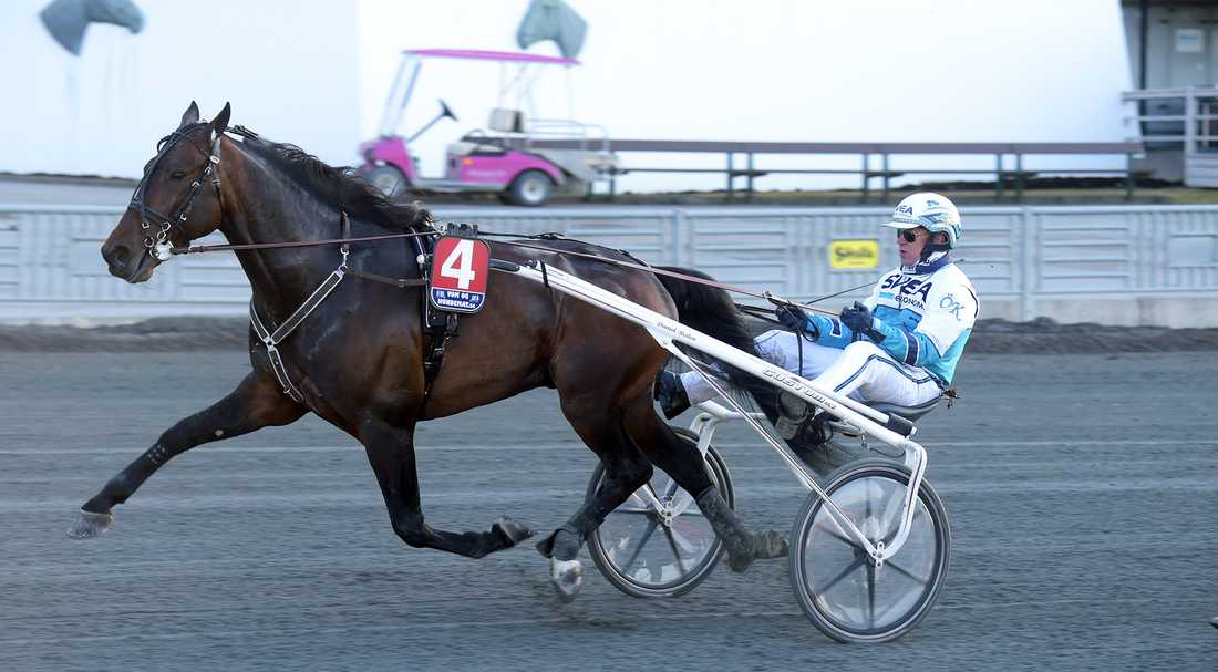 Perfect Spirit gjorde Sverige-debut under tisdagen och hyllas av Sportbladets travkrönikör Mattias Karlsson.