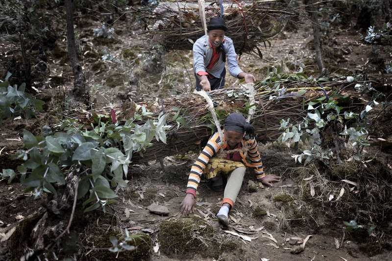 Alemneshs ben viker sig under tyngden. Abeba, som själv bär på ett lass, hjälper sin äldre kompis.
