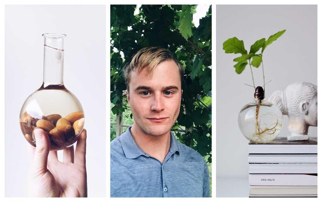 Gustav Broström, ekollonexpert, tipsar om sina bästa tips för att lyckas gro en ekplanta.