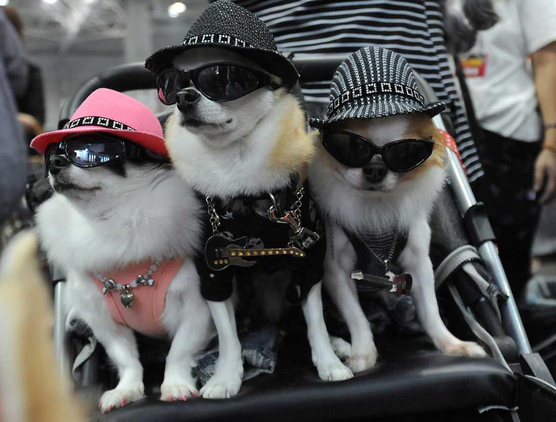 """""""För många människor i Japan är det ingen skillnad på att köpa ett husdjur eller att köpa en handväska,"""" säger Emi Kaneko från organisationen Lifeboat"""