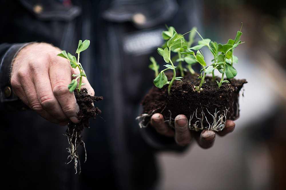 Dags att plantera i trädgårdsodlingen.