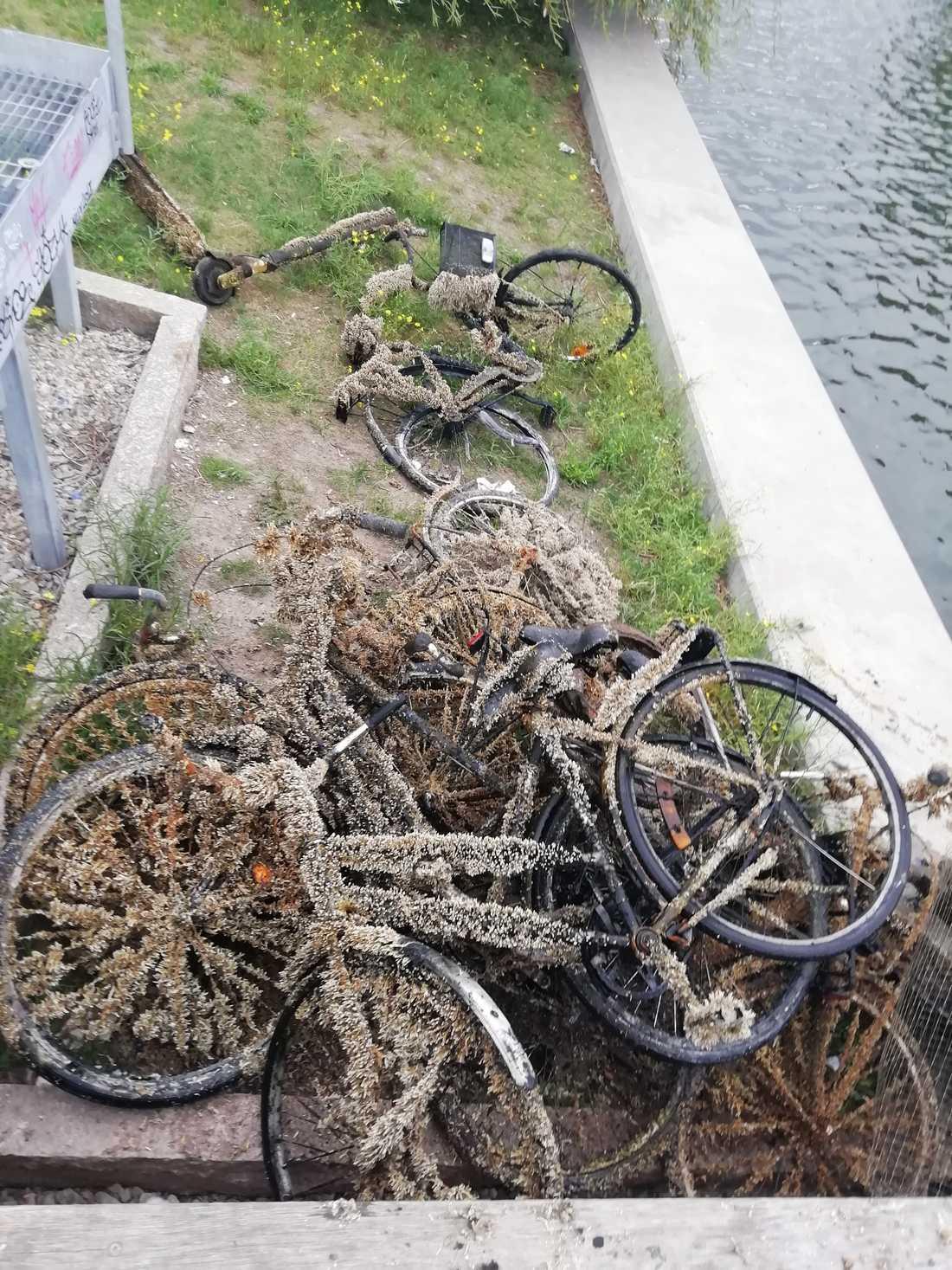 Den första dagen fick vännerna upp drygt 35 cyklar.