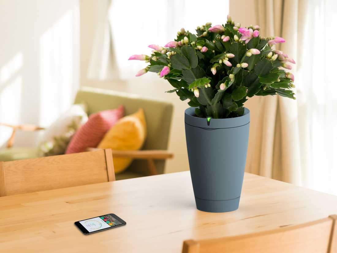 En smart blomkruka håller koll på frukten och vattnar sig själv.
