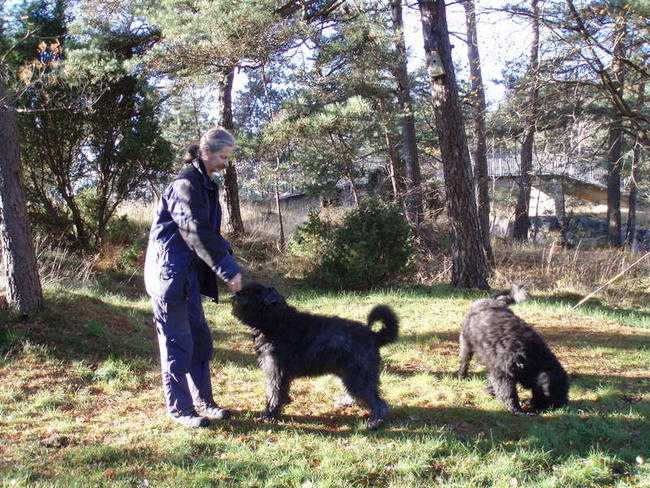 VARM OCH GODHJÄRTAD Carl-Eric Cedvander levde ett stilla liv innan misshandeln. Han tillbringade mycket tid tillsammans med hunden Barney och dennes bror Julius. Barney var med vid det brutala överfallet.