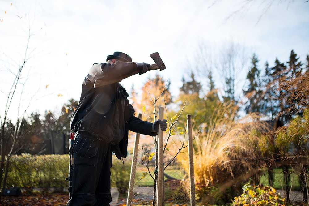 Skydda späda träd med gnagskydd kring stammen men stängsla dem gärna också.