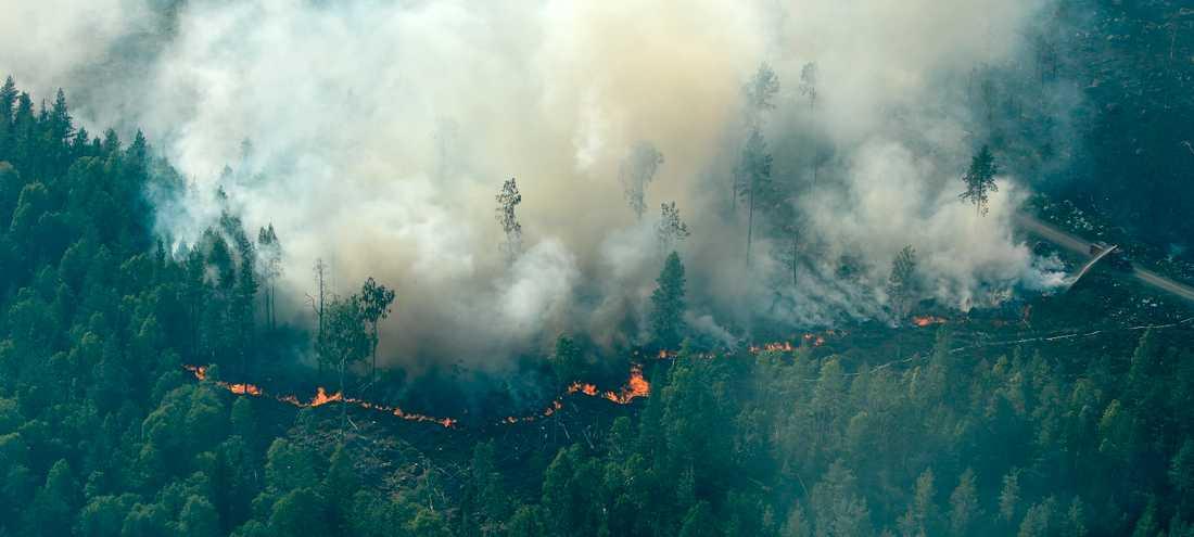 Flygbilder över branden runt Ljusdal.