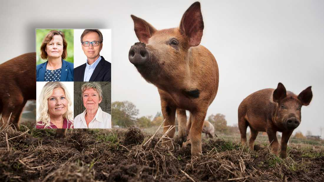 Smittsamma djursjukdomar riskerar att spridas till Sverige med en ökad användning av antibiotika som följd, skriver debattörerna