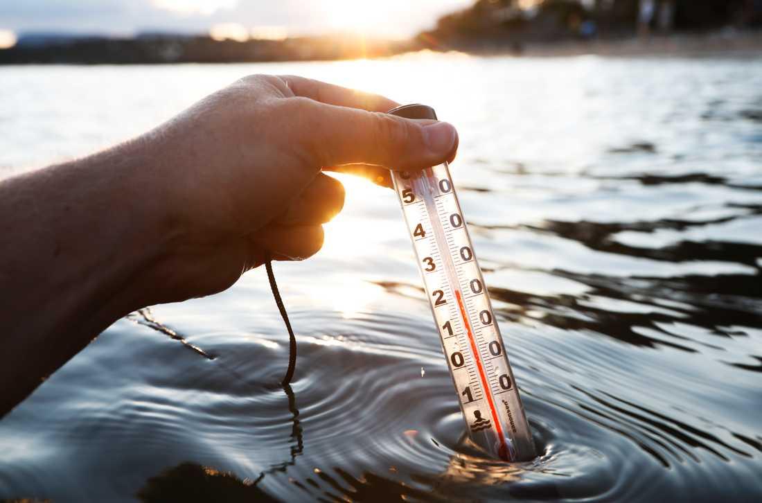 Vibriobakterier kan finnas i hav och sjöar om vattentemperaturen varit över 20 grader. Arkivbild.