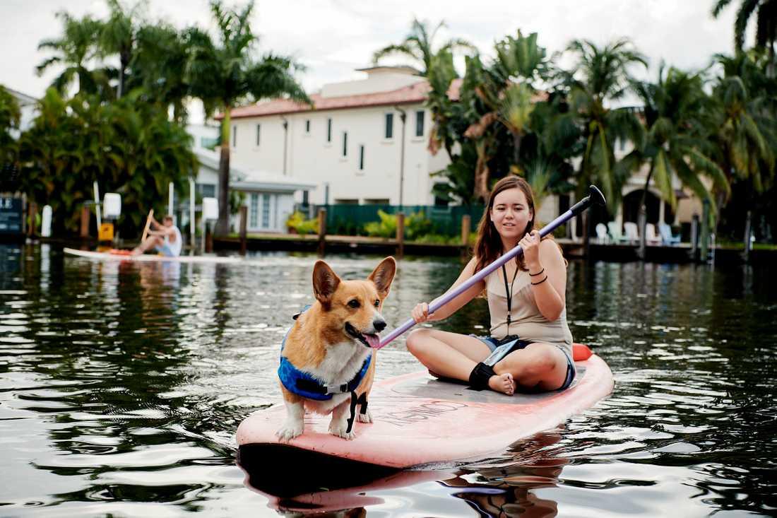 Hundsurfing är en del av upplevelseprogrammet.