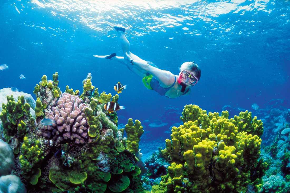 Barriärrevet är världens största korallrev.